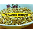 Groceries - Organic - Seeds - Fenugreek Seeds - 3x250g - Sproutable
