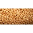 Groceries - Organic - Grains - Wheat - 2x1kg - Sproutable