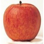 Conventional - Apples - Royal Gala - Small -  - approx 1kg