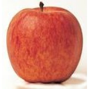 BULK - Conventional - Apples - Royal Gala - Small - Full Box approx 10kg