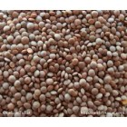 Groceries - Conventional - Dhals - Massoor Dhal 1kg