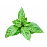 Conventional - Herbs by the Kg – Basil 500g