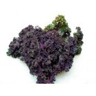 Organic - Kale - RED - Bunch - Grower Direct
