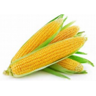 Organic - Sweetcorn - Each