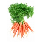 Conventional - Carrots - Baby