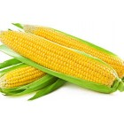 Conventional - Corn - Sweetcorn