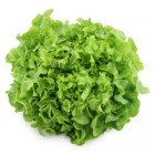 Conventional - Lettuce – Green Festival – Each