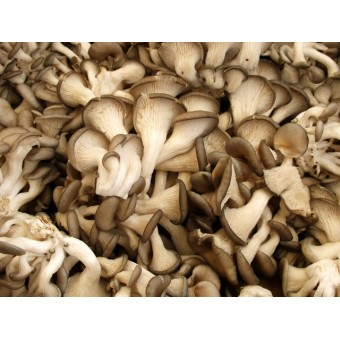 Conventional - Mushrooms - Oyster - Punnet