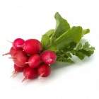 Conventional - Radish – Bunch