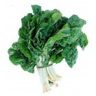 Conventional - Silverbeet – Each