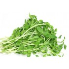 Conventional - Sprouts - Snow Pea Sprouts