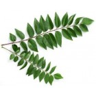 FROZEN - Curry Leaves - 100g - FROZEN or Fresh