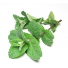 Conventional - Herbs by the bunch – Mint