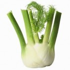 Conventional - Fennel – Each